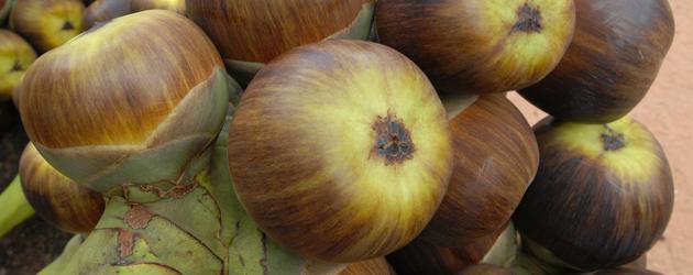 14.Sugar Palm