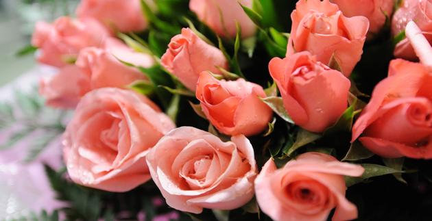 19-f2_rose