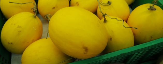 43.melon