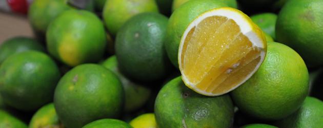 45.Lime