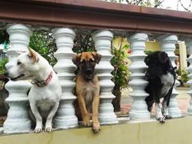 我が家の番犬3匹