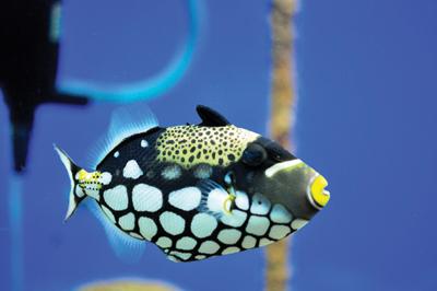 f1-aquarium-2
