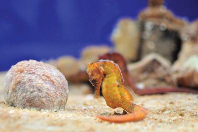 f1-aquarium-3