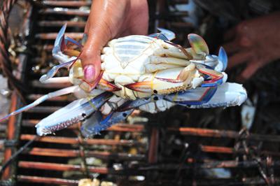 f1-crabmarket-freshcrab